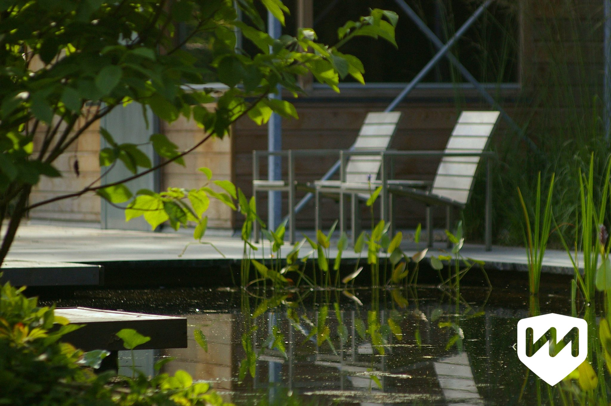 Modern garden with natural pool van mierlo tuinen
